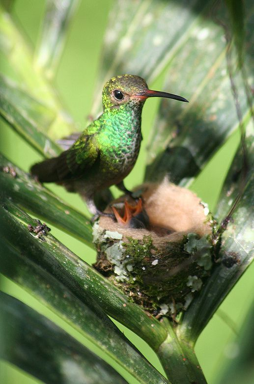 The Daily Cute: 10 Hummingbird Photos – Parade