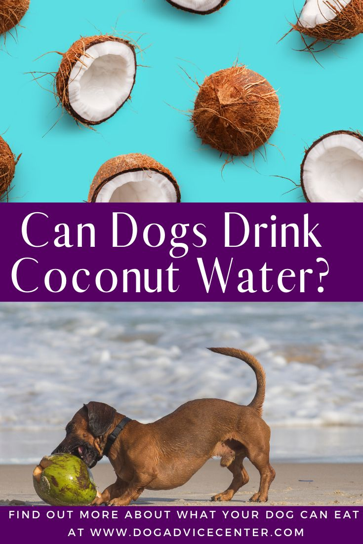 Can Dogs Drink Coconut Water in 2020 | Coconut water ...