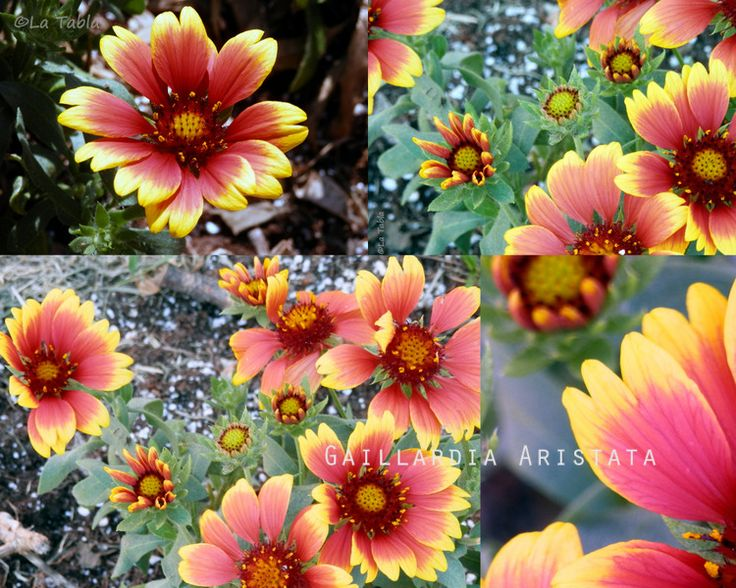 El Blog de La Tabla: Septiembre, el mes de las flores