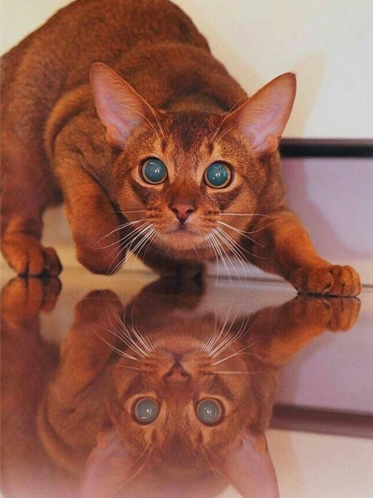Perfect Reflection - Ginger Kitty - What more to say other than we just LOVE cool stuff!
