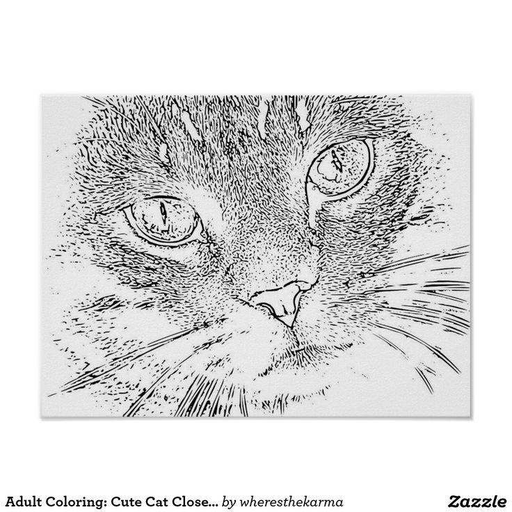 Adult Coloring Cute Cat Close Up Poster