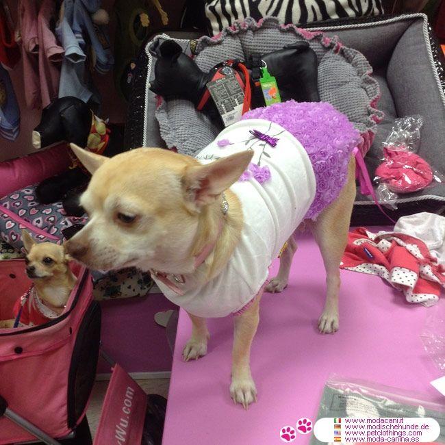 Vestito per Cagnolina con Gonna di Roselline Lilla #ModaCani #Chihuahua - Vestito Rosa per una cagnolina di piccola taglia (chihuahua, maltese, barboncino) con corpetto bianco in ciniglia senza maniche, con scollo tondo
