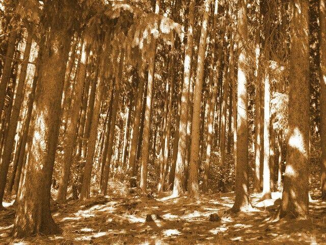 Jako dříví v lese...