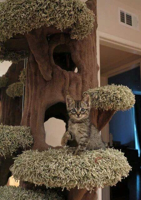 168 Best Images About Indoor Pet Ideas On Pinterest Cat