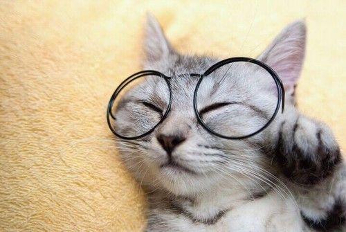 smart kitty :)