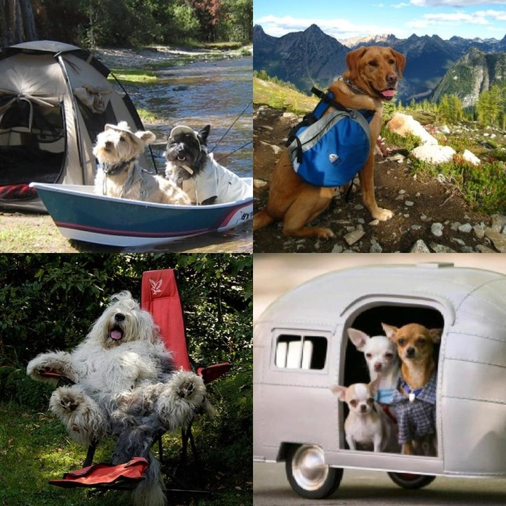89 Best Images About Happy Camper Amp Rv Pets On Pinterest