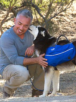 Doggy Backpack by Ceasar  http://www.cesarsway.com/sites/default/files/backpack_big_0.jpg?1320803375Whisperer Cesar, Hyper Dogs, Calm Dogs, Cesar Milan, Dog Whisperer, Whisperer Dogs, Cesar Millan, Dogs Backpacks, Dogs Whisperer
