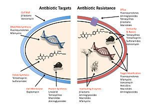 Antimicrobial resistance - Wikipedia, the free encyclopedia