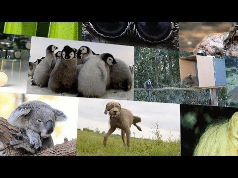Los 10 animales más adorables de 2014 (según Nature)