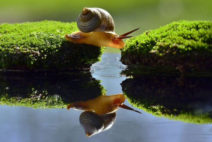 Snail Stretch Photography by Chairunnas Chairunnas, Bontang, East Kalimantan, Indonesia - http://www.wego.co.id/?ts_code=464dc&sub_id=&locale=id&utm_source=464dc&utm_campaign=WAN_Affiliate&utm_content=text_link