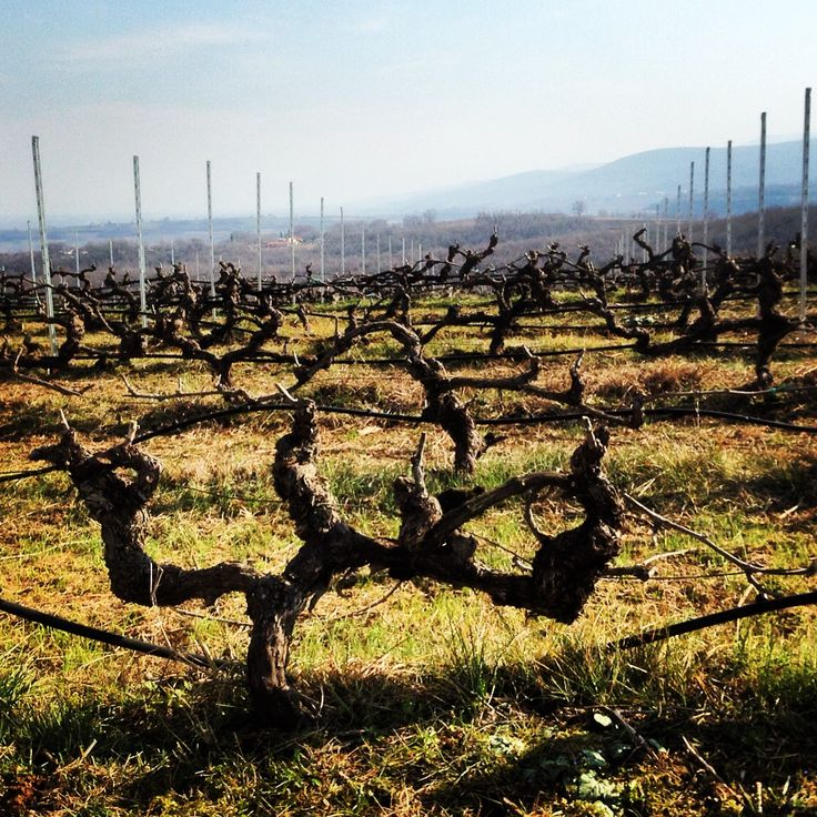 wineyards during winter - trigiro tours in Greece #trigiro #tour #bike #wine #wineyard #feel #northGreece #Greece #travel