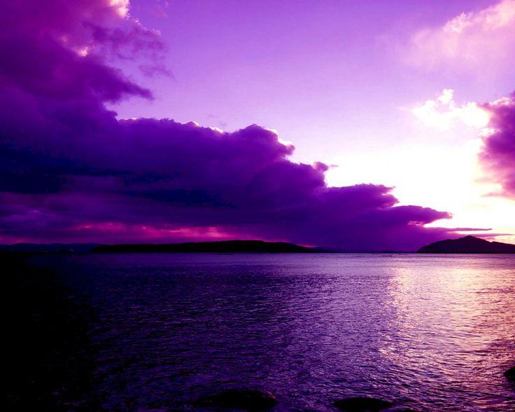 море фиолетовых цветов картинки при ярком свете