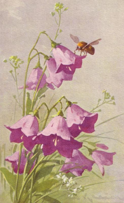 Catherine Klein victorian postcard                                                                                                                                                                                 Mais