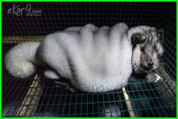 12 Gambar Hewan Berbadan Gemuk Karena Obesitas Lucu Atau Prihatin Dunia Fauna Hewan Binatang Tumbuhan Hewan Gambar Hewan Lucu