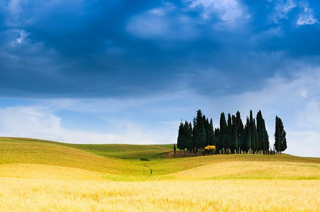 Cypress Trees in Val d'Orcia by 5ERG10, via Flickr