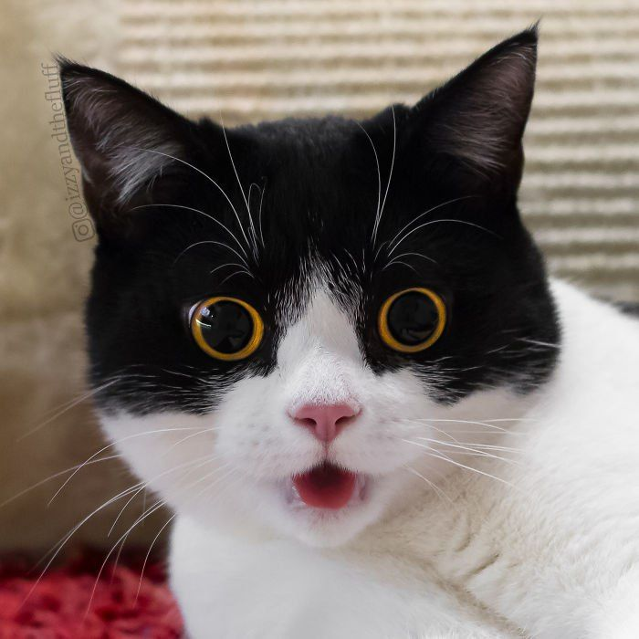 нержавейку используют картинки удивленных котиков самые
