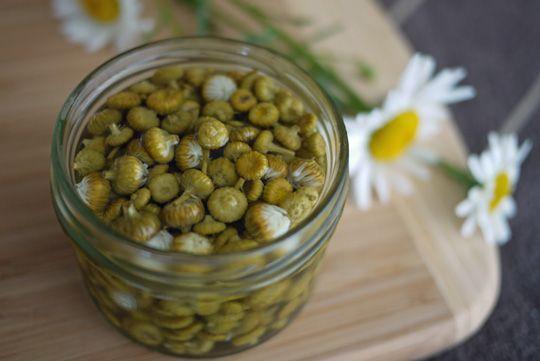 Recette Câpres de marguerites - Fleurs comestibles
