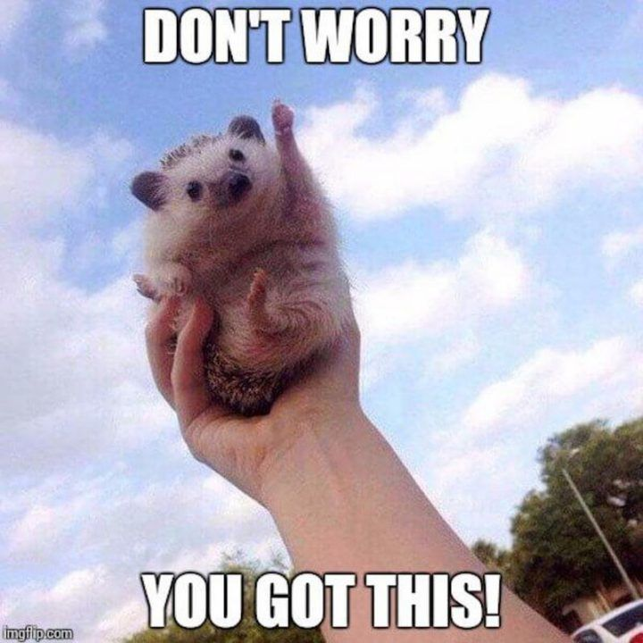 101 You Can Do It Memes For Those Times When You Need Inspiration Funny Motivational Memes Motivational Memes Work Memes