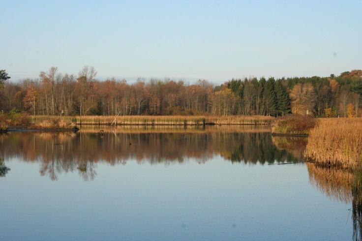 #Conservation #Nature #Outdoors #Hiking #Autumn #ChristieLake #Hamilton #HCA