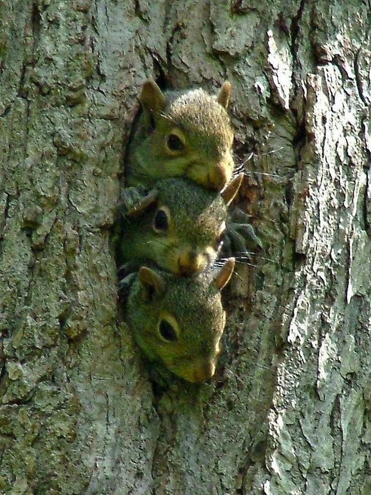 Squirrels | Nuts | Pinterest