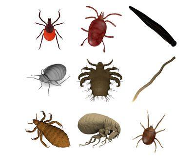 Paraziti: Kde všude na ně narazíte a co vám udělají