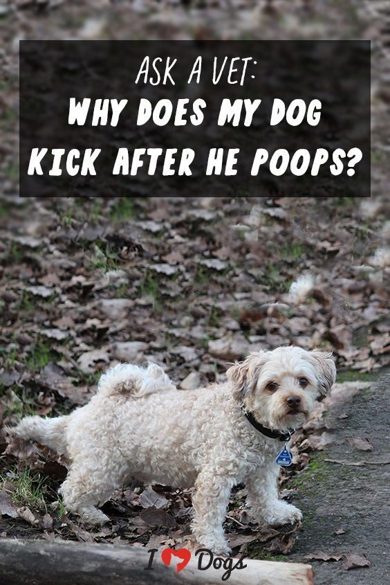 Why Does My Dog Kick After He Poops Dogs Dog Training