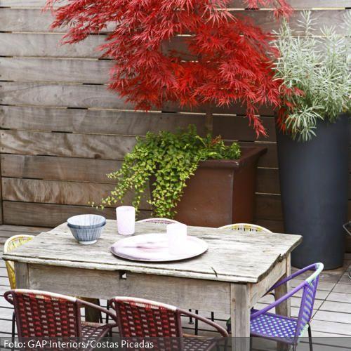 Ein besonderer Hingucker ist auf dieser Terrasse der leuchtend rote Ahorn vor dem Hintergrund eines sonnengebleichten Holz-Sichtschutzes. Der stylisch-verwitterte Holztisch wirkt authentisch und neben den überdimensionalen Blumentöpfen nicht zu opulent. Für einen Material- und Stilbruch sorgen die leichten Stühle aus Kunsstoffgeflecht.