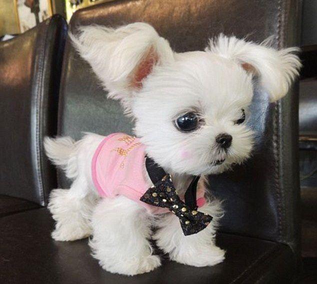 Неужели это самый симпатичный щенок в мире?