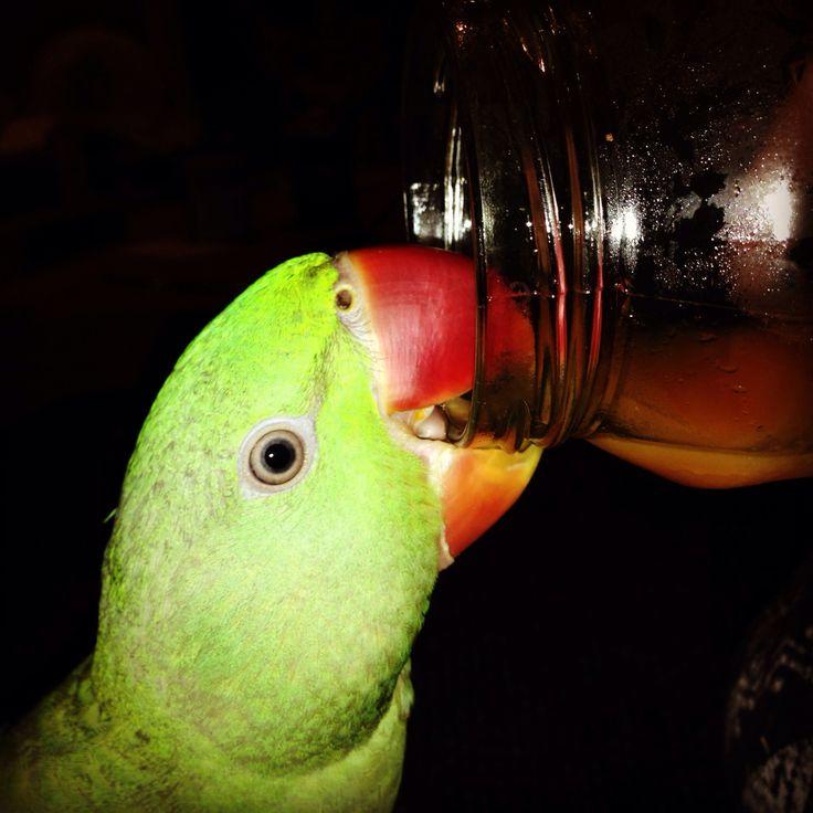 Juicy bird