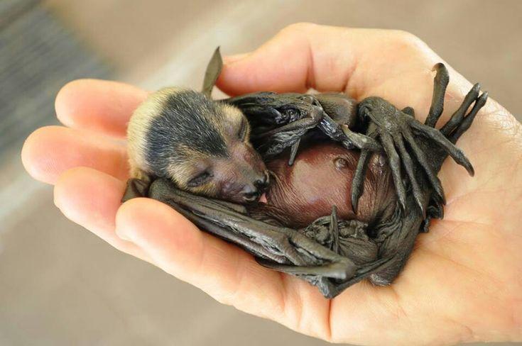 Baby Bat so sweet. More