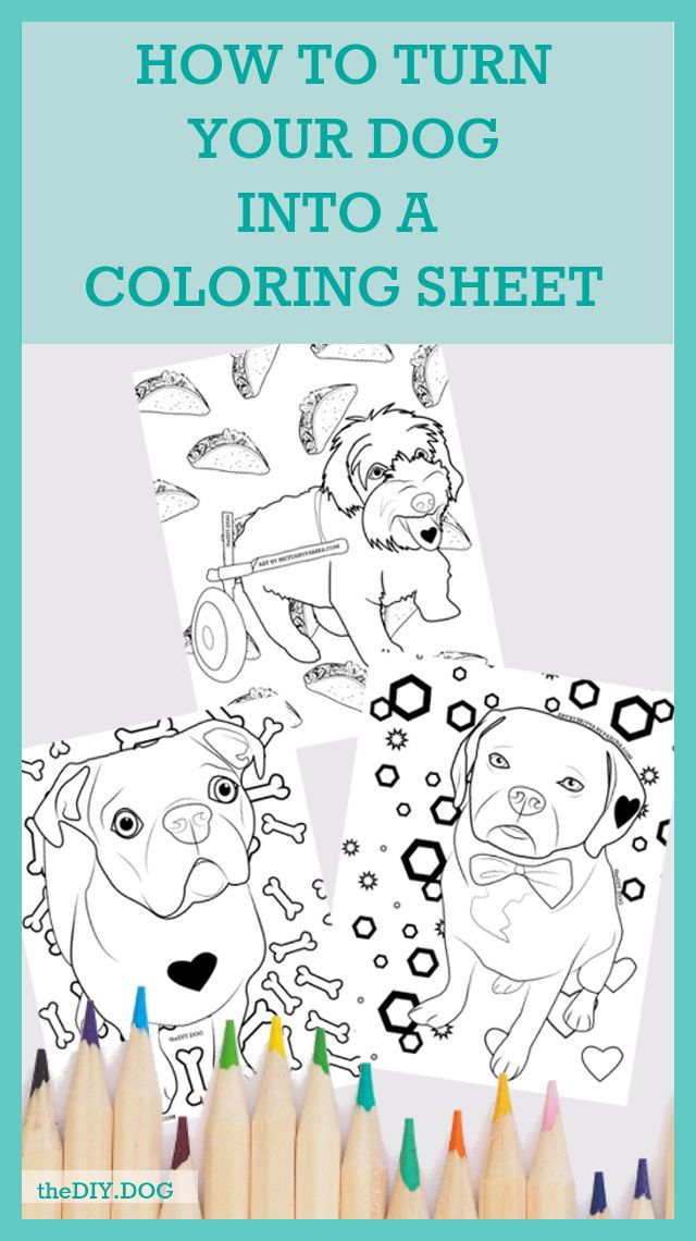 How To Turn Your Dog Into A Coloring Sheet Dog Coloring Page