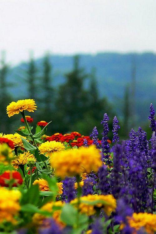 Flowers, Shiretoko, Japan - photo by Brett  Kropp
