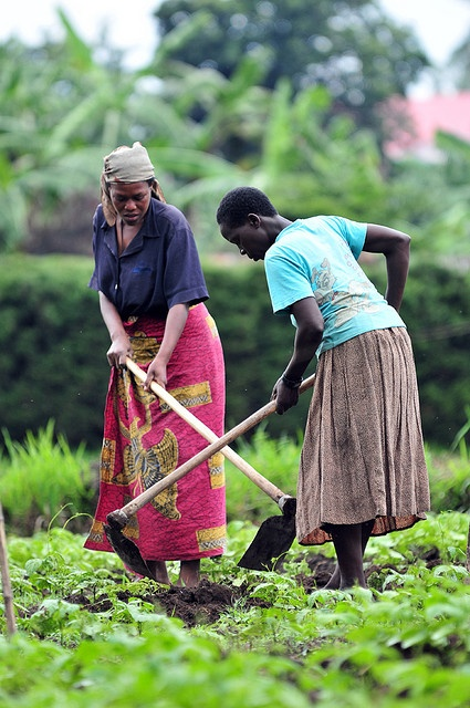 Millions of women around the world work    growing food for their families.