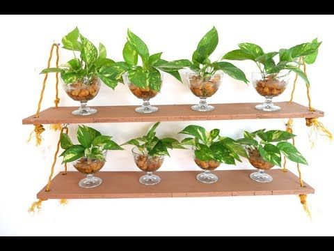 Money Plant / Pothos Leaf Cuttings Impressive DIY Wall Decoration Idea to Bring … – Plants & Gardening