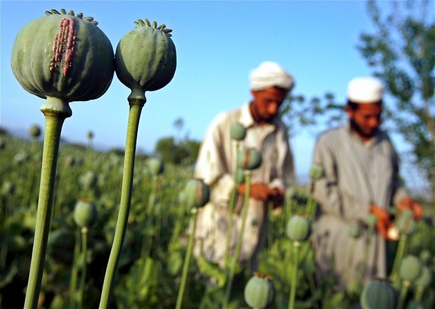 from poppies to opium to heroin. afghanistan.
