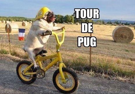 Tour De Pug Meme