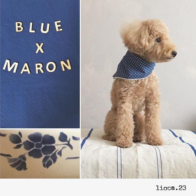 . ⒷⓁⓊⒺ 🅑🅐🅣🅞🅝 . . . . . ʕ·͡ˑ·ʔ ⚑︎⚐︎ . @mint_kitty2525 さんより #ブルーバトン頂きました ♩ . マロンも参加させて頂きます ❁︎ . . . バトンはこちらに置いておきます! . もしよかったら... どなたか拾ってくださいね ◡̈⃝︎* . . . . . . . . . . . . . . . . . . . . . . . ⌂↟↟↟ . #オルビス#ORBIS  #ブルーバトン#青 #といぷーどる#デカプー #マロン#愛犬#おうち時間  #暮らしを楽しむ #暮らし #日々のこと #日々の記録  #日々の暮らし#ナチュラル #ナチュラルインテリア #インテリア#シンプル #toypoodle #instadog  #instagood #interior  #toypoodlelove #mydog #poodlelove #poodle