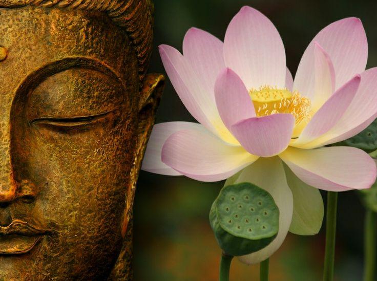 De lotusbloem is de bloem van het LICHT.Omdat zij tot bloei komt door de zon en het water, symboliseert zij geest en materie, vuur en water, de oorsprong van alles wat is. Op grond van dit alles geldt zij als zinnebeeld van wedergeboorte, eeuwige terugkeer, schepping, vruchtbaarheid, vernieuwing en onsterflijkheid, alsmede toppunt van schoonheid