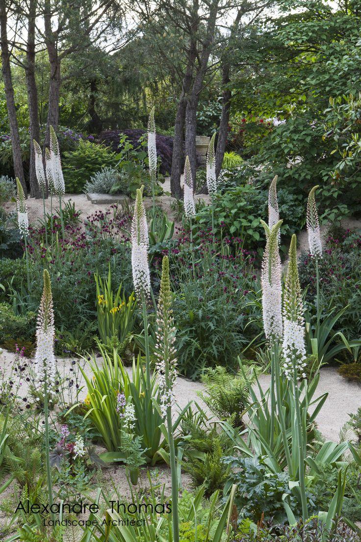 Eremurus robustus & Cirsium rivulare Atropurpureum in Agapantus Garden by Alexandre Thomas Landscape Architect.