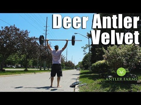 (1) Deer Antler Velvet Extract for IGF-1 & Recovery | Antler Farms Review - YouTube