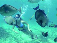 Poipu Guided Snuba Diving Tour, Kauai tours & activities, fun things to do in Kauai   HawaiiActivities.com