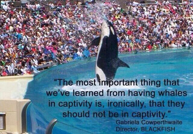 marine animals in captivity We now know even more about how socially and mentally complex marine animals are while tides against marine captivity are beginning to turn in the us, seaworld plans to expand into international markets where people are less sensitive to marine captivity.