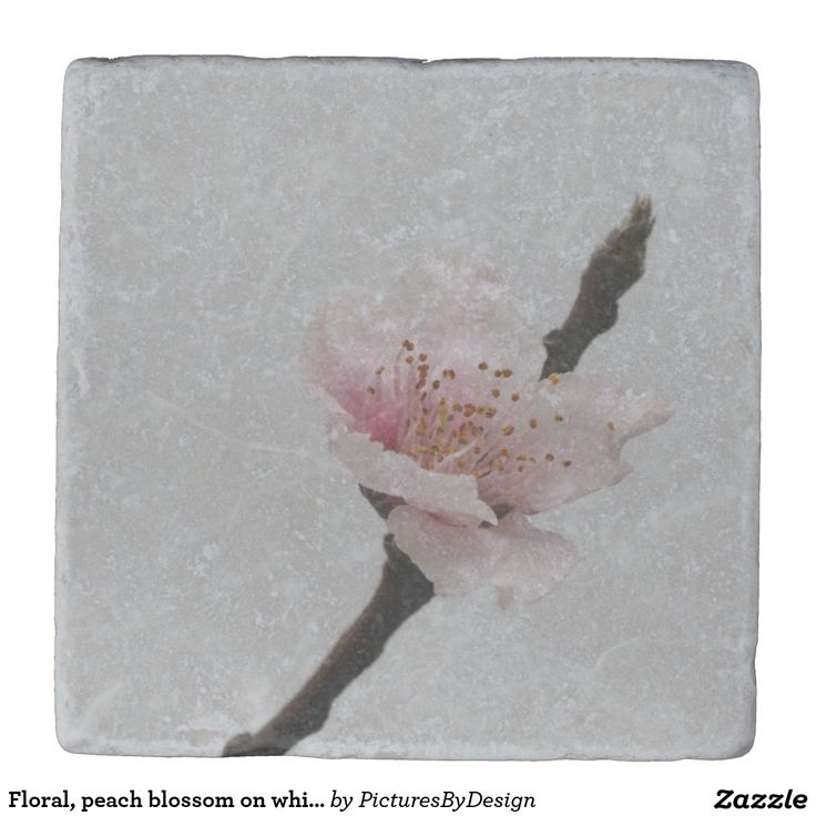 Floral, peach blossom on white stone coaster