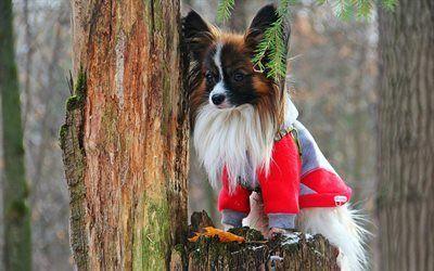 Scarica sfondi pineta, pet, cane, un ceppo di albero marcio, papillon