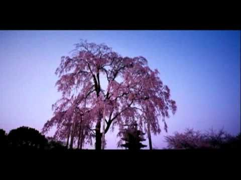 そうだ京都、行こう。 2011年・春 東寺 - YouTube