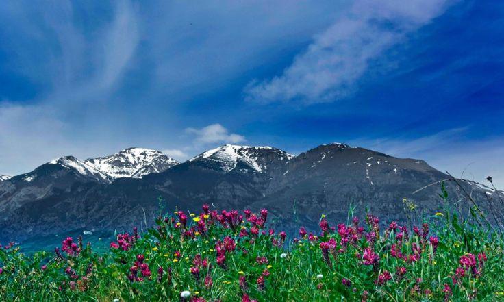 La Majella un'area dagli ambienti selvaggi ed incontaminati che in primavera…