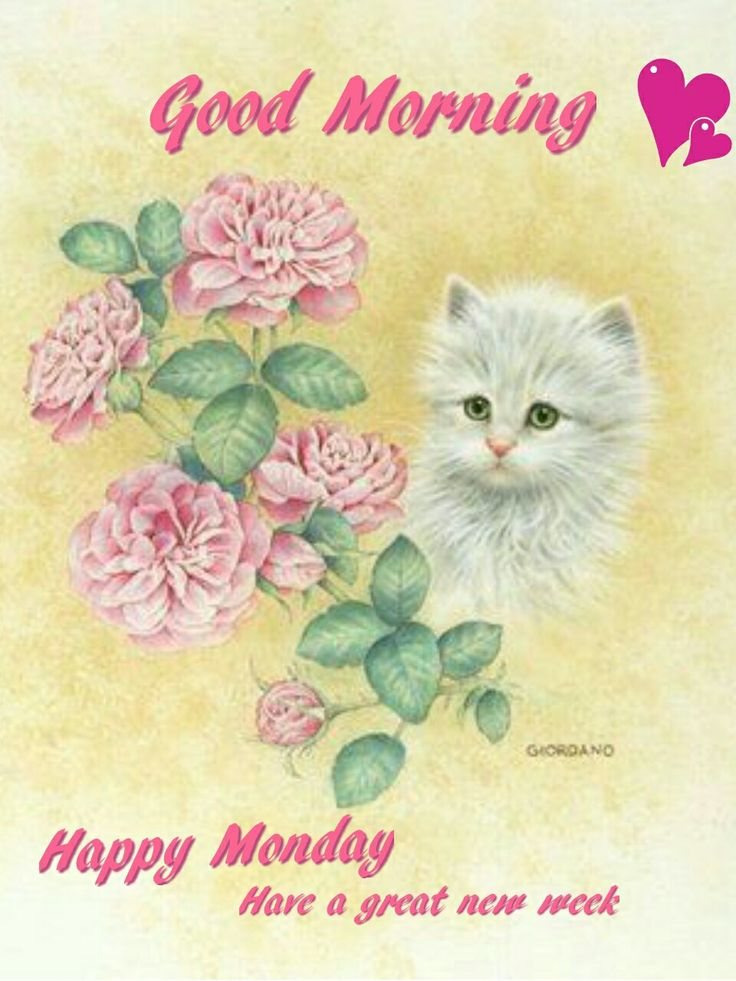 Good Morning Sisters Image : Best images about monday on pinterest mondays happy