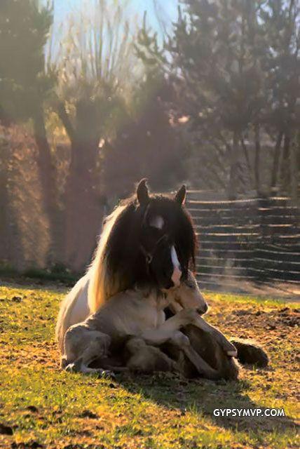 My new dream horseAnimal Pics, Baby Horses, Ears Mornings, Mothers, Sweets, Cuddling, Newborns Foals, Births, Heart Warm