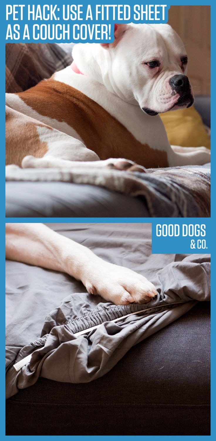 Love cuddling your dog on the couch, but hate all the fur buildup? Use this simple couch cover hack to keep your furniture fur free!