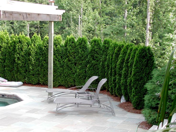 95 Best Home: Tree U0026 Shrubs Images On Pinterest | Shrubs, Landscaping Ideas  And Backyard Ideas
